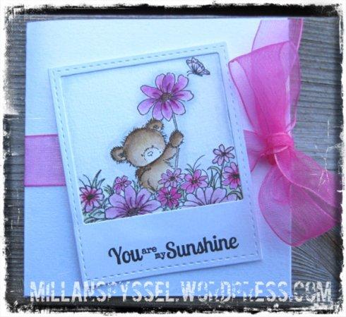 IMG_0457_sunshine